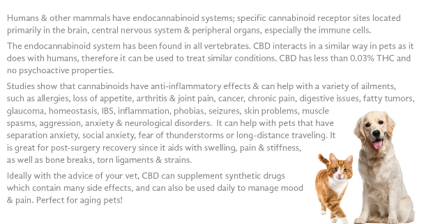CTFO CBD Products For Pets - Changing The Future Outcome